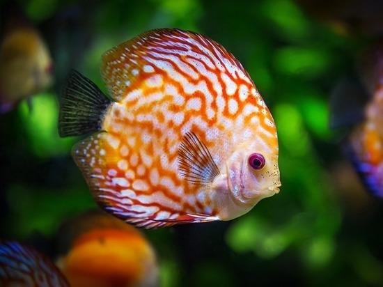 Липчанин нырнул в аквариум с рыбами в гипермаркете