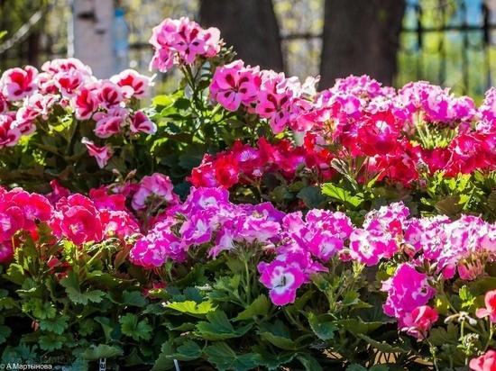 В Тамбове состоится XII городской фестиваль цветов