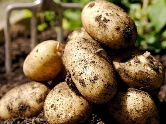 Самарский художник посадил картошку в ямы на дороге