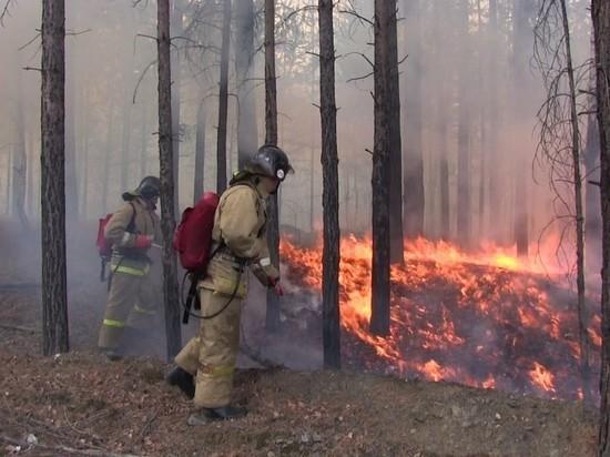Очаг лесного пожара оперативно ликвидировали под Костромой
