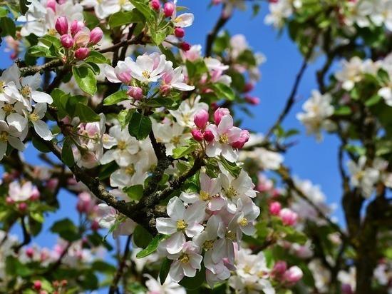 Сибирские яблони и пикниковые зоны появятся в Нижневартовске