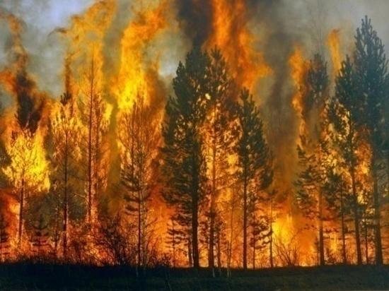 В Ульяновской области установится 4 класс пожарной опасности