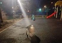 Приманил ветчиной, угрожал отрезать лапы: в Москве разыскивают «догнеппера»