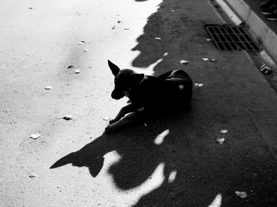 В Астраханской области участились нападения бродячих собак