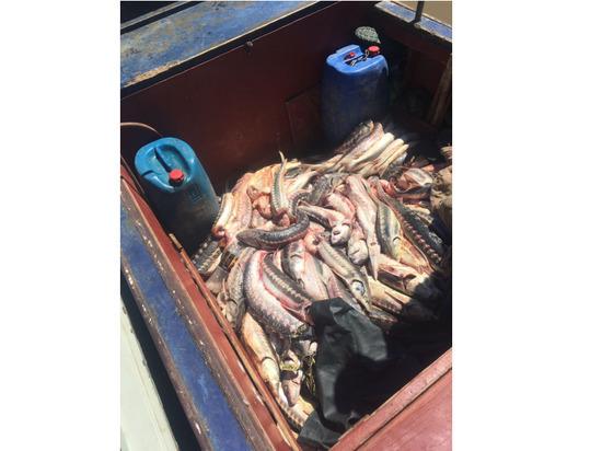 Во время погони за рыбаками полицейские применили оружие