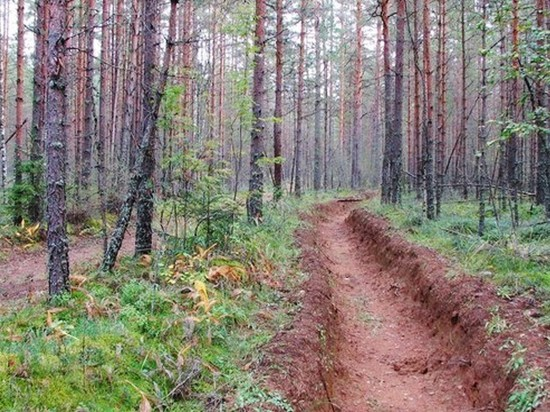 В Ульяновске обустроили 43 км противопожарных полос