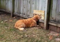 Опасности для собак и кошек на даче: будьте внимательны
