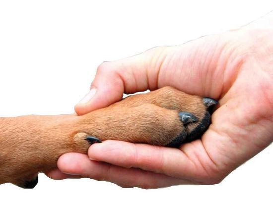 В Оренбурге живодер избил до полусмерти собаку