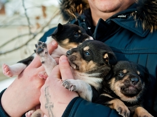 Бродячих собак Волгограда начали чипировать