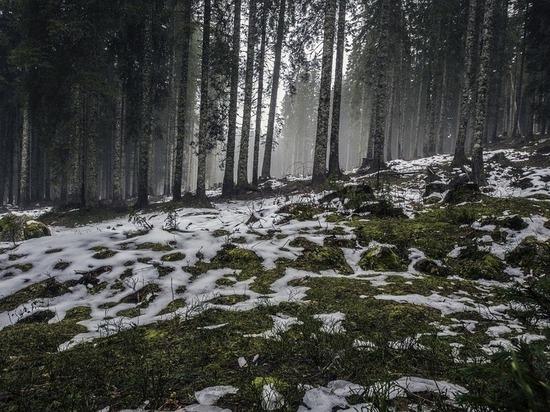 Полицейские Югорска спасли потерявшихся в лесу
