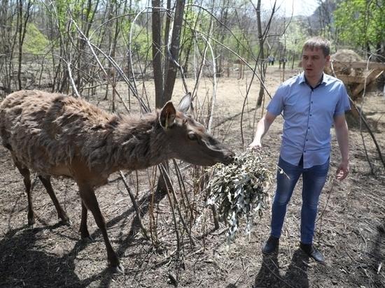 Ферму маралов в Приморье посетили высокие гости