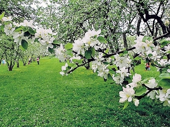 Яблоневый сад с тамбовской земли зацветет в Люксембурге