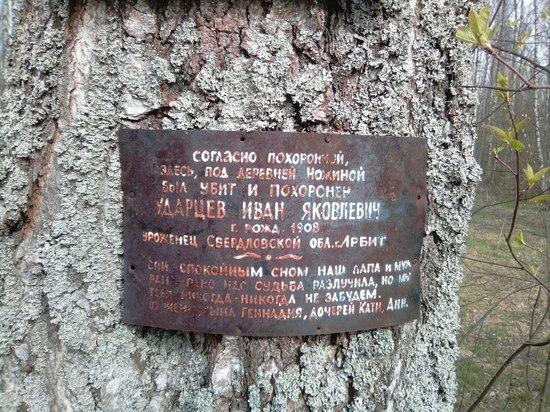 Поисковики из Владимирской области отреставрировали памятные таблички на деревьях