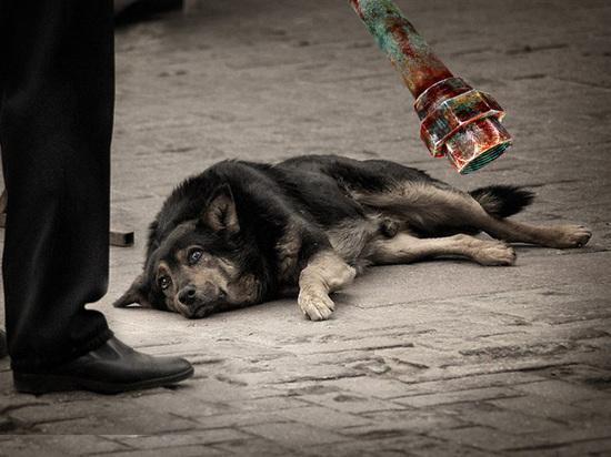Мужчина понесет наказание за избиение собаки в Оренбурге