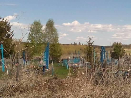 На кладбище в деревне Ново-Казанка Бузулукского района пасутся коровы