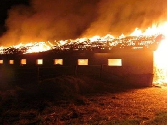 В Мордовии огонь уничтожил складские помещения