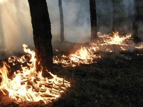 В Мордовии объявлен высокий уровень пожароопасности
