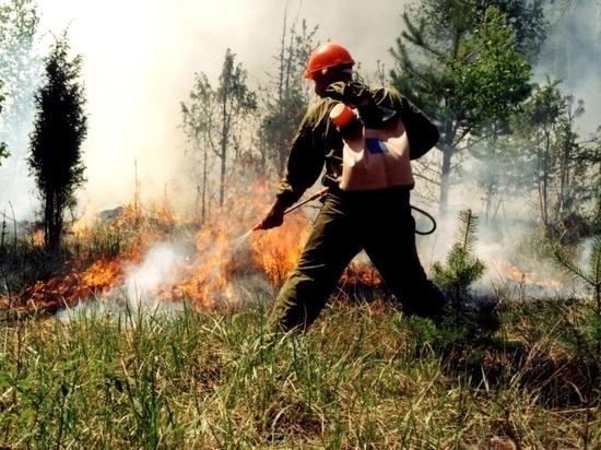 В лесах Татарстана наблюдается 3 класс пожароопасности