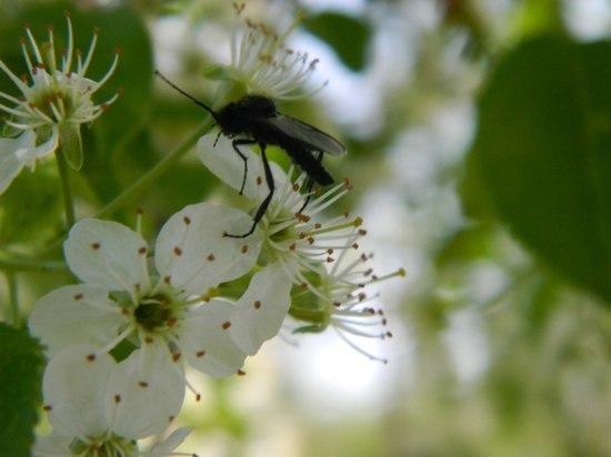 Волгоградские водоемы обрабатывают от кровососущих насекомых