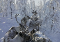 Экспертный центр «ПОРА» оказал финансовую поддержку документальному фильму «Великий Северный путь»