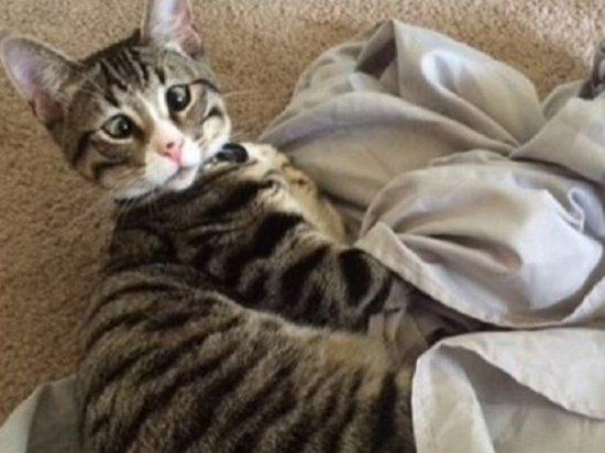 В Сызрани спасатели защитили людей от озабоченной кошки