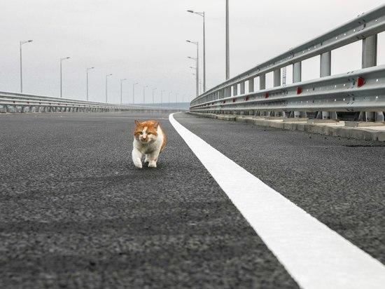 Россияне переживают за сохранность жизни главного «смотрителя» Керченского моста