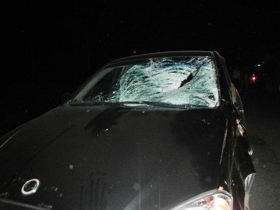 ДТП с лосем произошло на красносельской трассе