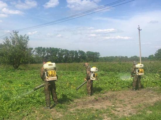 Огромные плантации борщевика подступают к населенным пунктам Тулы