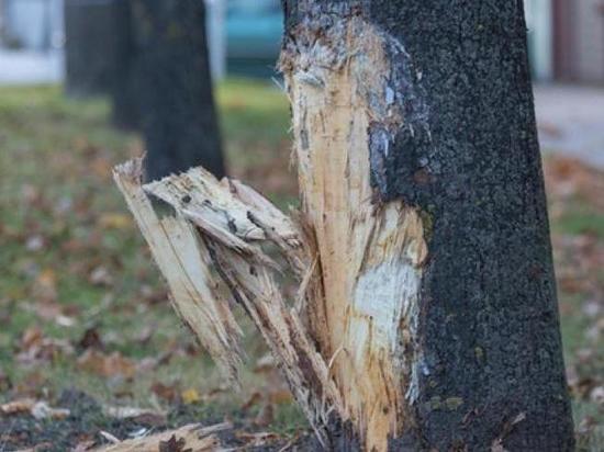 В Ульяновской области «Гранта» опрокинулась в кювет и врезалась в дерево
