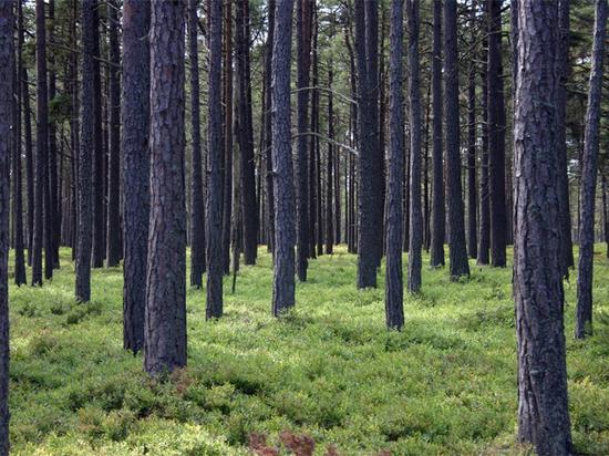 Уральский лесничий получил условный срок за вырубку деревьев на шесть миллионов