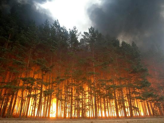 Из-за жары в Тверской области ввели режим высокой пожарной опасности