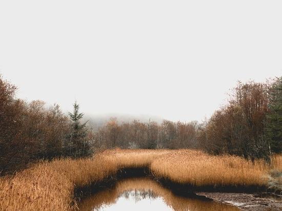 В лесах Югры стартовала экологическая акция