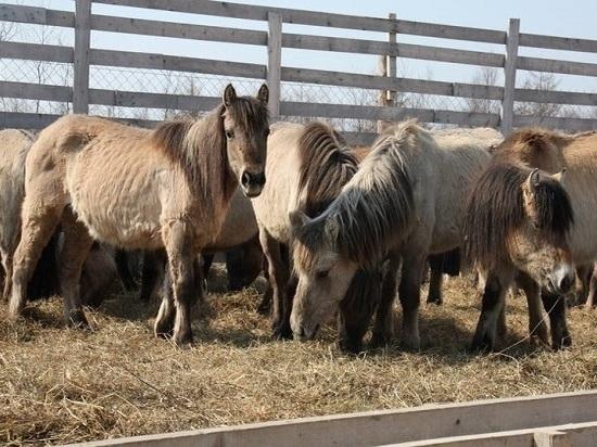 На остров из Якутии привезли лошадей мясной породы
