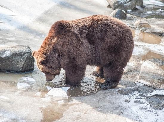 Вахтовики в Югре убрали мусор на буровых, испугавшись медведей