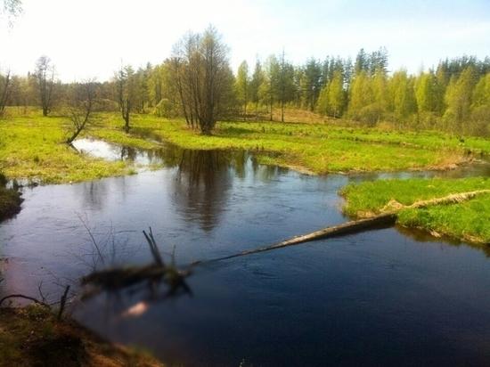 В Тверской области мужчина разлюбил и убил женщину