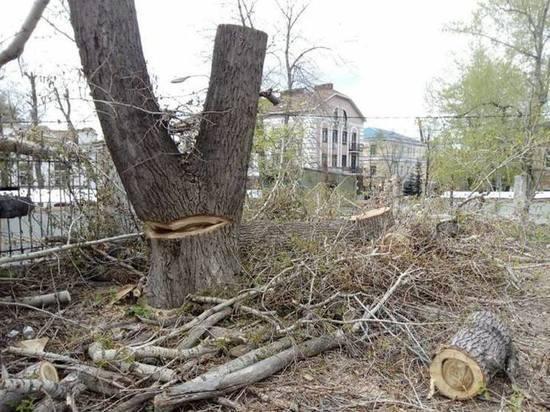 Полиция 8 раз отказывалась возбуждать уголовное дело о вырубке деревьев в центре Ульяновска