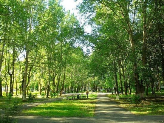 Северодвинск выбирает место под подарочные деревья
