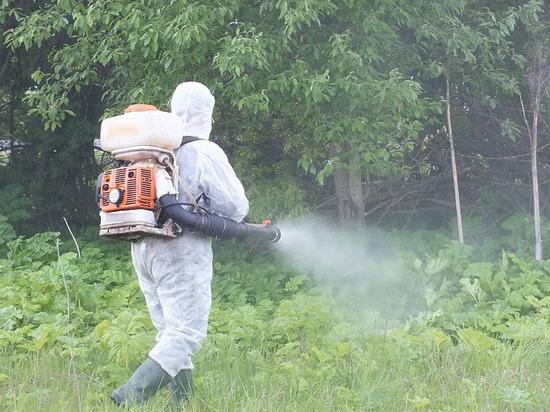 Борьбу с борщевиком в Костромской области начали с населенных пунктов