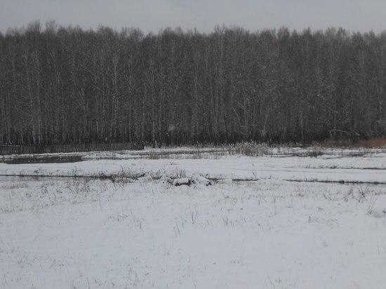 В Новосибирской области накануне выпал снег