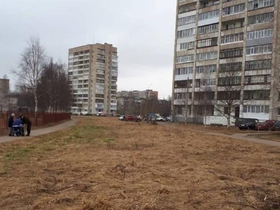 Мэрия Архангельска определилась, куда девать выигранные деревья