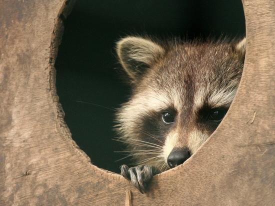 Названа новая причина, по которой многие животные скоро вымрут