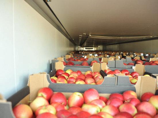 Тверские таможенники обезвредили 20 тонн запрещенных яблок