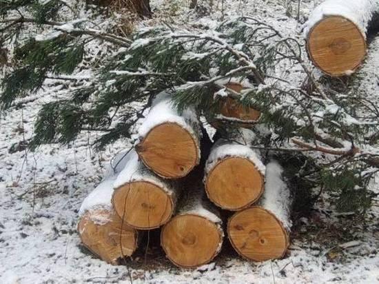 Костромич незаконно нарубил леса на 100 тысяч рублей