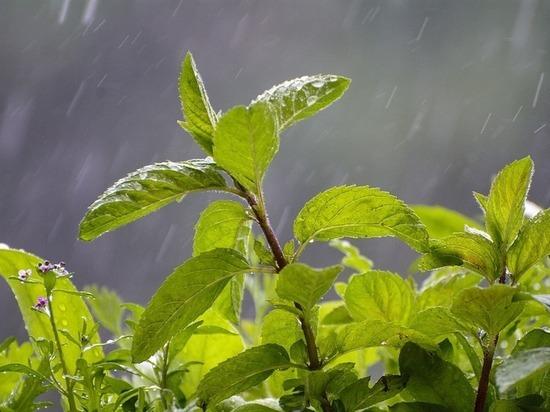 Остаток мая принесет в столичный регион «грибные дожди»