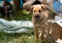 Бездомные животные с выставки «Дорога домой» обрели любящие семьи