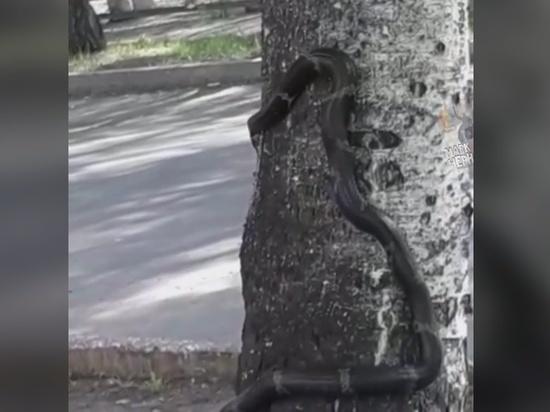 Порно видео девочка со зме й