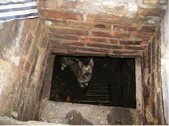 В Сызрани спасатели вытащили из погреба собаку, которая провела там трое суток