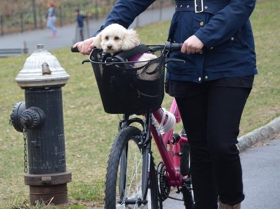 Не сесть на колеса: как уберечься от травм, катаясь на велосипеде
