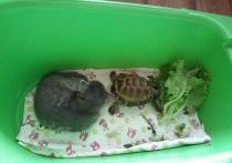Неожиданный поворот в судьбе черепахи-таможенницы: сбежала от хозяйки из огорода