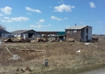 Поля незаконных экспериментов: кто и зачем уничтожает сельское хозяйство  в Свердловской области?